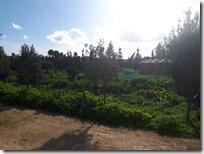 Vrt na Malti