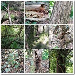 slika 4_ Kolaž dokaza učenika za zadatak Upoznaj drvo