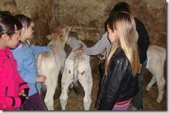 Slika 7. Dodirivanje životinja